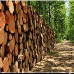 Orman diye diye: Orman Örgütleri