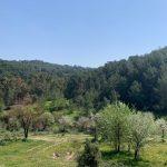 Türkiyedeki ormancılık!
